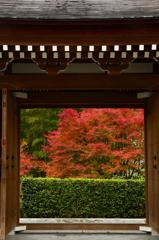 秋の寺院のお出迎えーⅡ
