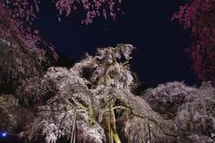 夜桜<清雲寺>-Ⅱ