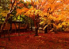 燃える古都の秋ーⅡ