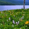 夏の湖畔-Ⅲ