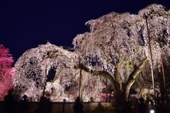 夜桜<清雲寺>-Ⅲ
