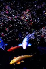 彩りの水面