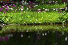 花の楽園-Ⅲ