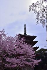 醍醐の桜ーⅠ