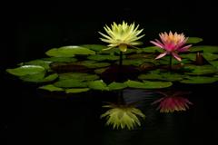 水の妖精-Ⅲ