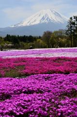 富士を彩るーⅡ