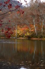 錦秋の鎌池ーⅡ