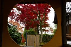 秋の寺院のお出迎えーⅣ