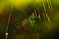 クモの巣の輝きーⅡ