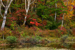 錦秋の池畔