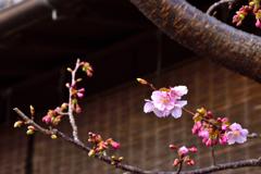 小江戸散策<ちょっぴりの春>
