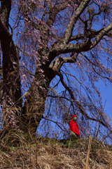 樹下に佇む