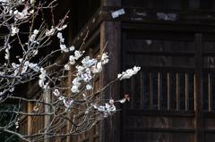 古刹の春ーⅡ