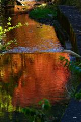 錦秋の流れ