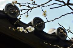 古都鎌倉散策<甍と白梅>