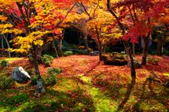 秋の十牛之庭<圓光寺>