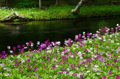 花の楽園-Ⅰ