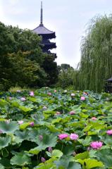 夏の京都<東寺>