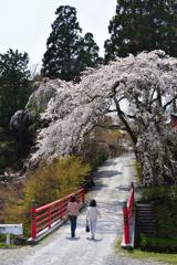 大原野の春<極楽橋>