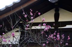 古都鎌倉散策<白壁と紅梅>