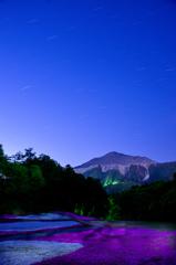 夜の芝桜の丘ー①
