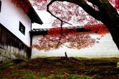 門跡寺院の秋<曼殊院>ーⅠ