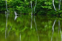 夏の乗鞍高原<まいめの池>