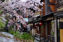 古都の春<祇園白川>