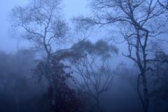 霧に煙る森