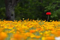 森の花園ーⅠ