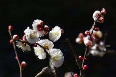 春の訪れーⅡ