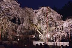 夜桜<清雲寺>-Ⅰ