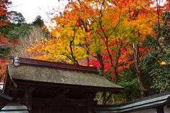 秋の室生寺ーⅠ