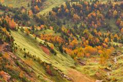秋の彩り<のぞき>