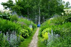 夏の花園ーⅠ