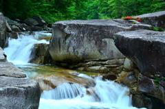 渓流に咲く岩躑躅ーⅠ