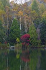 秋の彩り<木戸池>