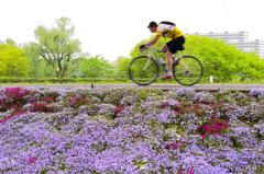 春風を切って<サイクリング>