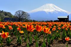 富士を彩るーⅤ
