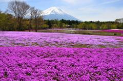 富士を彩るーⅠ