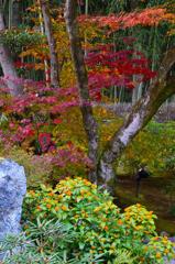 錦秋の庭ーⅡ