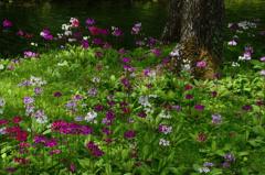 花の楽園-Ⅳ