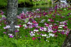 花の楽園-Ⅱ