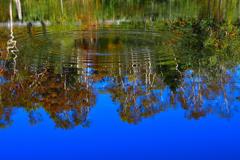 秋の彩り<上の小池>