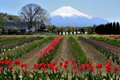 富士を彩るーⅣ