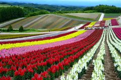 北のお花畑<四季彩の丘>-Ⅰ