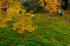 錦秋の庭ーⅠ