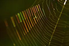クモの巣の輝きーⅠ