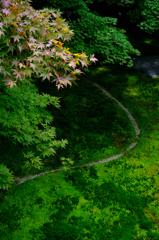 苔と青紅葉