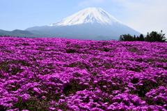 富士を彩るーⅢ